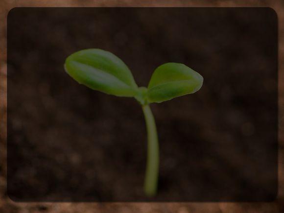 Seedling-Blank.jpg