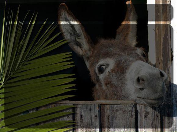 Palm-Donkey.Title.jpg