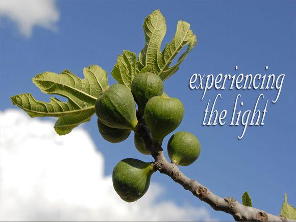 Experiencing-the-Light-Fig-Tree-Blank.jpg