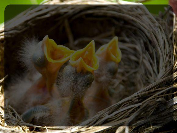 Living-Memories-Birds-Nest-Blank.jpg