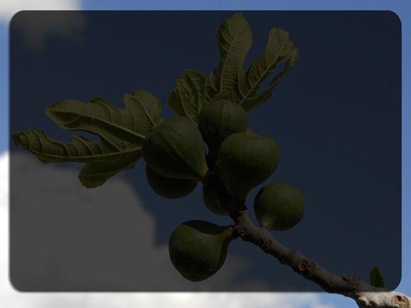 fig-tree-reading.jpg