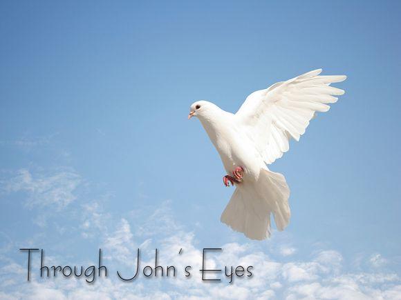 Dove-Blank.jpg