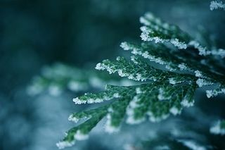 150093-stock-photo-christmas-advent-winter-cold-snow-ice-frost