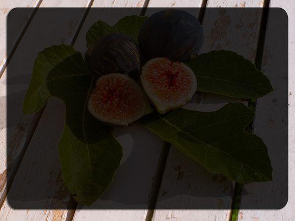Figs-Blank.jpg