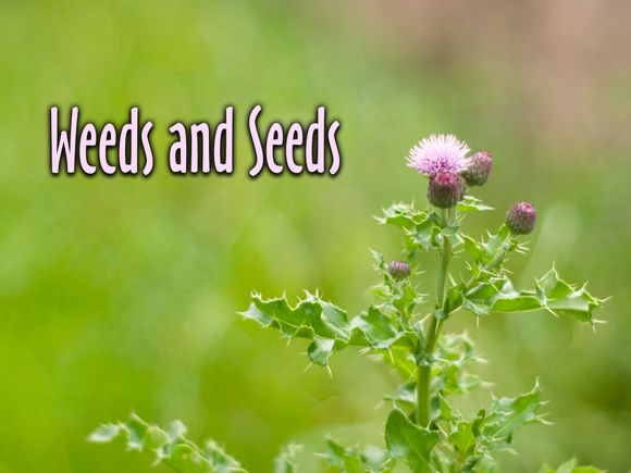 weeds-seeds-reading.jpg