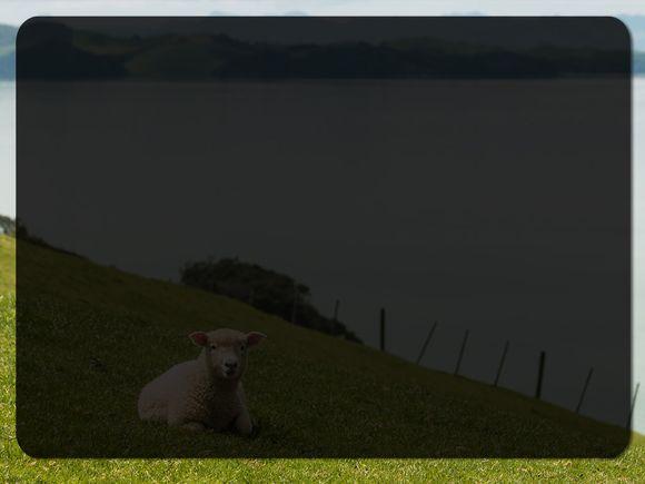 sheep-lake-blank.jpg