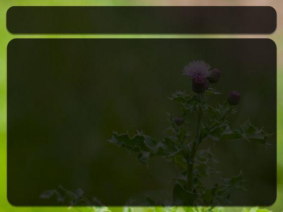 weeds-seeds-reading.jpg
