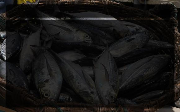 Fishermans-Tale-Reading.jpg