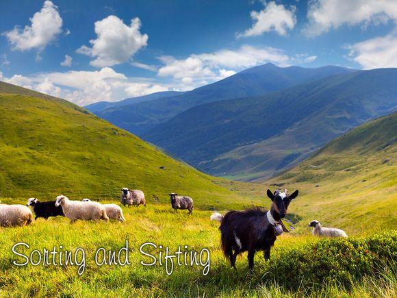 Sorting-Sifting-Sheep-Goats-Reading.jpg