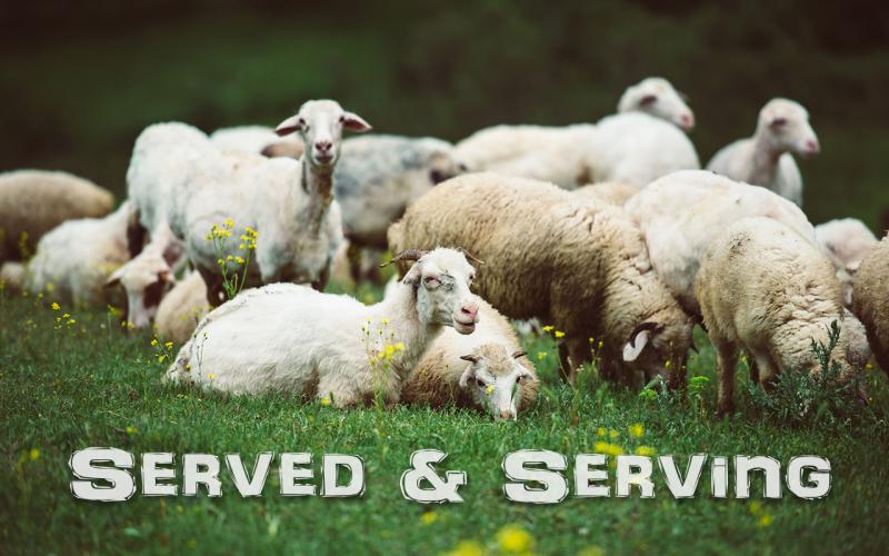 Served-Serving-Title